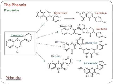 University of Nebraska, Part 4: Phenolic Based Antioxidants