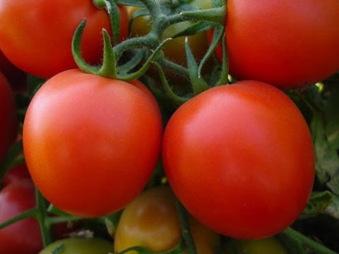 Top 10 best high antioxidant rich fruits