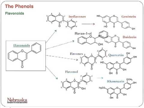 University of Nebraska, Part 4: Phenolic Based Antioxidants