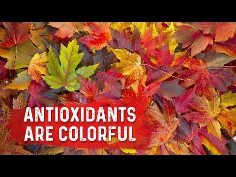 Antioxidants Control the Leaves Changing Color In The Fall