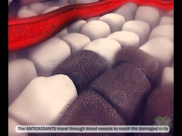 Antioxidants – vs – Free Radicals – Immune System
