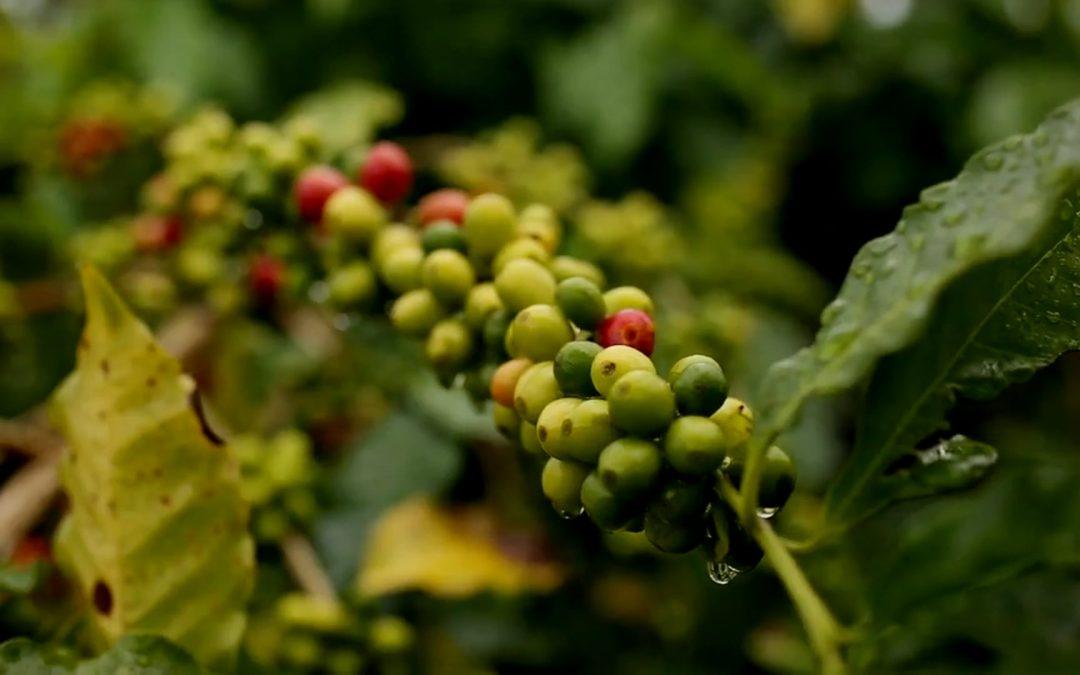 KonaRed® – Hawaiian Coffee