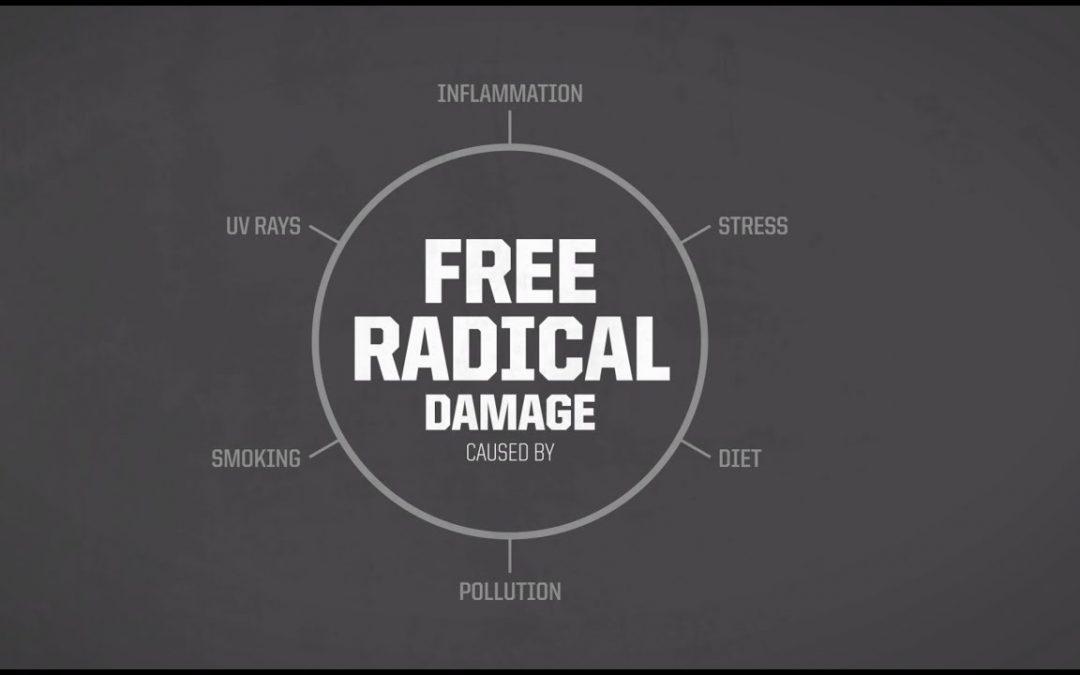 Antioxidants Fight Free Radical Damage